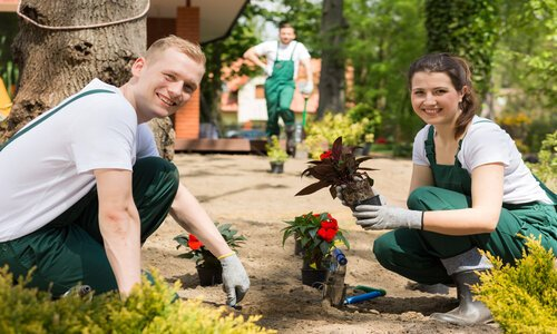 Two enthusiastic Norman Landscaping employees planting flowers on a sunny day